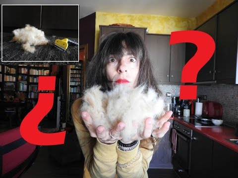 What to do if your dog sheds | Dog Myth Busted #14