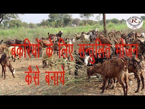 बकरियों के लिए पौष्टिक आहार कैसे बनाये, How to make nutritious diet for goats