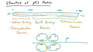 p53 mutations in cancer
