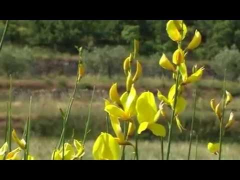 Les Herbes de Lucien   Herbes de Provence
