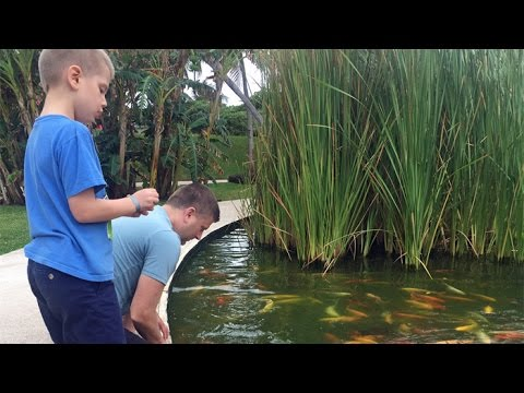 Trying to catch koi fish with our bare hands, Cancun, Mexico