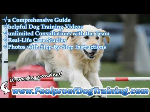 How To Stop Barking At Night - Canine Training