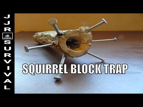 How To Make A Squirrel Block Trap