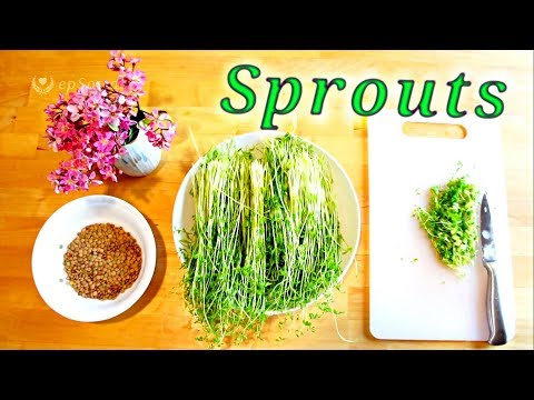 How to grow sprouts or seeds.