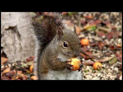 Drunken Squirrel