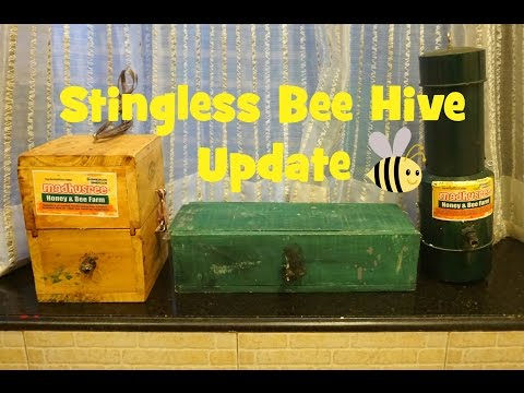 Stingless Bee Hive Tour & Update | Viewer Queries| April 2017 | Meliponiculture