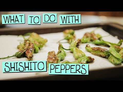 What to do with Shishito Peppers