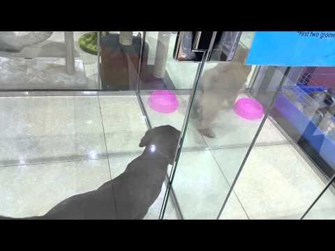 Dogs at Kangar Pet Shop Dubai 31.03.2015