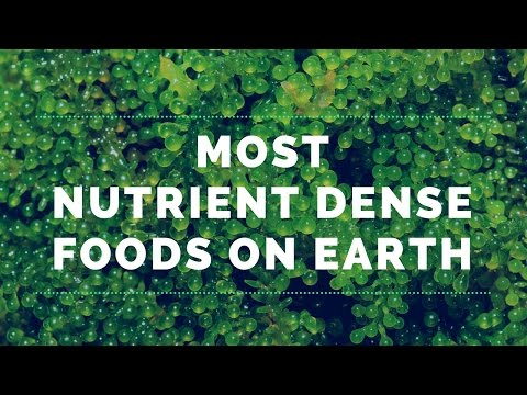 4 of the Most Nutrient Dense Foods on Earth
