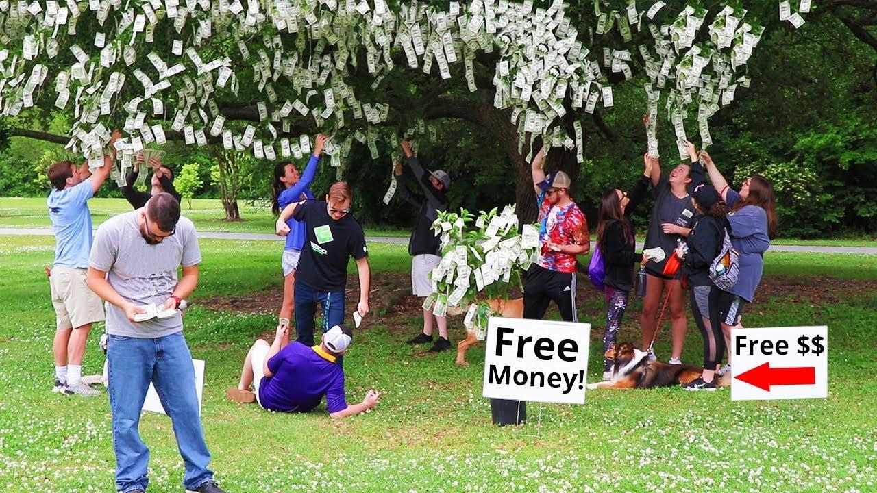 I Made Money Grow On Trees