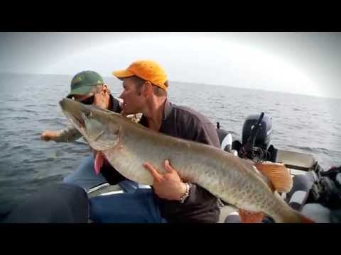 Monster Musky Eats Smallmouth - The Fish of a Lifetime!