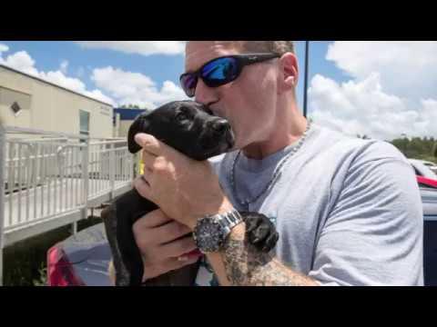 Please Help Big Dog Ranch Rescue