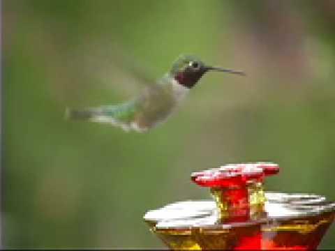 Glorious Hummingbird Feeder - Wind & Weather