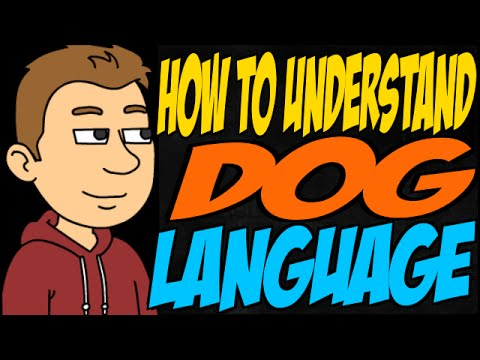 How to Understand Dog Language