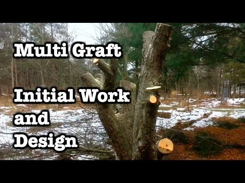 Multi Graft - 1 - Initial Cutting and Approach