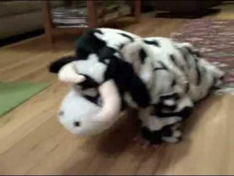 Esme as Cow