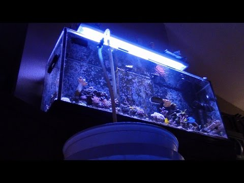 HOW TO CHANGE AQUARIUM WATER AND CLEAN A SUMP COMO HACER UN SUMP