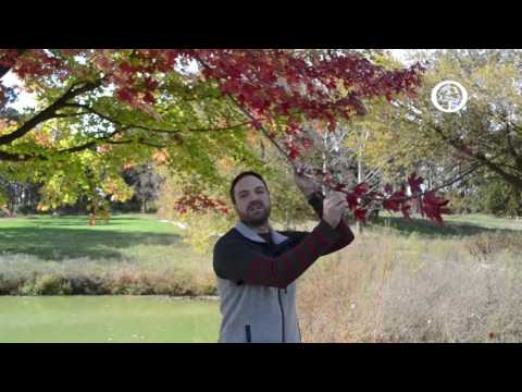 Ask an Arborist: Why do Leaves Change Color?