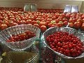 How To Can Tomatoes - The Easy Way