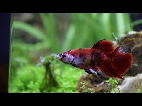 New Fish Moved Fish