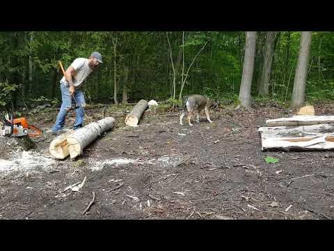 USDA Zone Five Permaculture: Building a Split Rail Fence - Pt.1