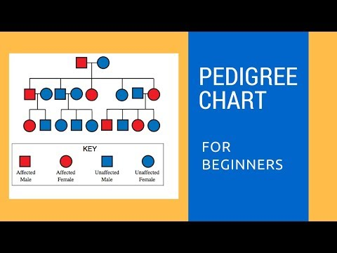 Pedigree Charts for beginners