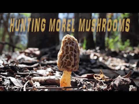 Hunting Morels in the Ozarks