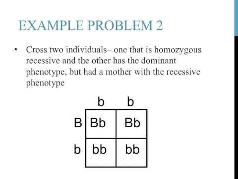 Punnett square practice problems (simple)