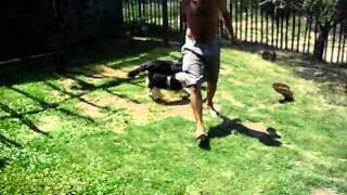 enseñando mi perro a cazar