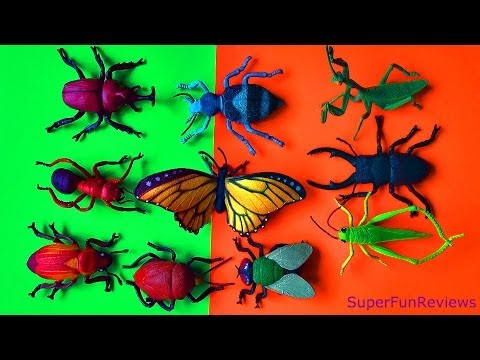 Insect Collection Beetles Fly Grasshopper Scarab Rhino Praying Mantis Stink Bug Butterfly FUN ending