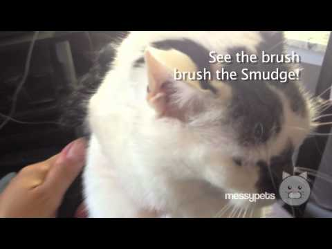 Cat shedding excessively - the Smudge gets a brushing!