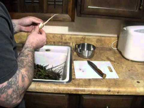 Gathering Thistle Root