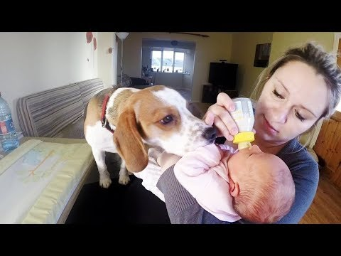 Cute Dog Never Had to be Taught How to Love Baby | Charlie the dog and baby Laura