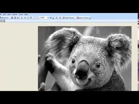 How to Convert a Picture to Black and White Online for Free