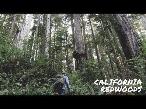 Exploring the California Redwoods | Travel America