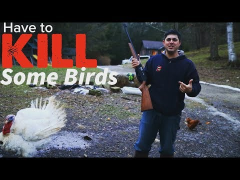 We have to get rid of some birds...