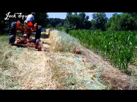 Cutting Oat Hay with New Idea 251 and WD Allis Chalmers