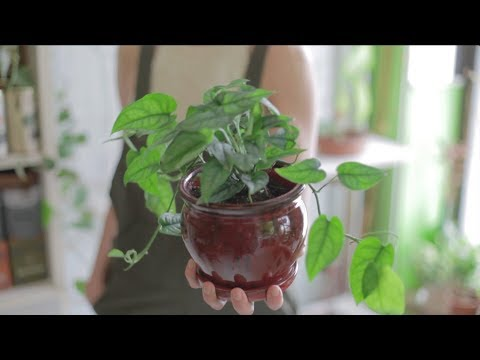 Ep 51: Plant One On Me: How to Master Indoor Plant Care
