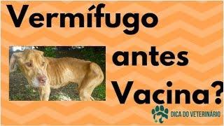 Vermífugo No Filhote Antes Da Vacina - Macarrãozinho Nas Fezes - Dica Do Veterinário