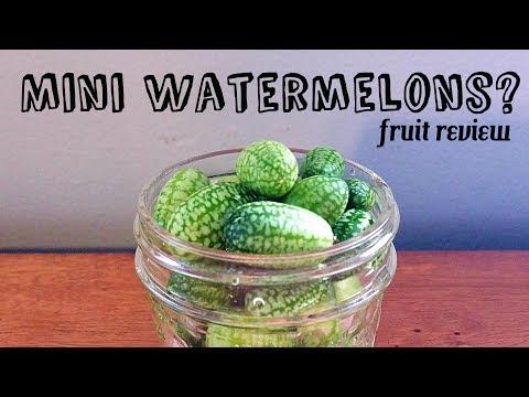 Cucamelon Review + Pickle recipe (mouse melon) - Weird Fruit Explorer Ep 231