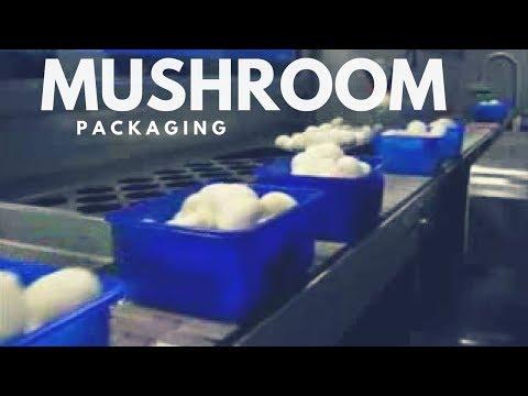 Mushroom Machinery - ChampCorr for Mushroom Packaging