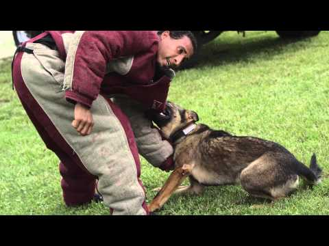 Drug & Bomb Dogs, Police Dogs, Florida | K9 Detection Dog Training, Police Dogs for Sale