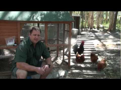 Worm, Mite, & Lice All In One Treatment For Chickens & Quail Ivermectin