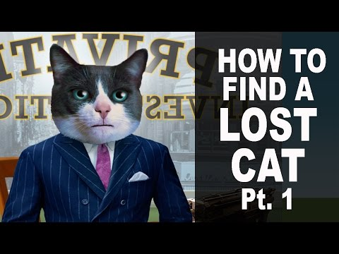 How To Find A Lost Cat Pt. 1