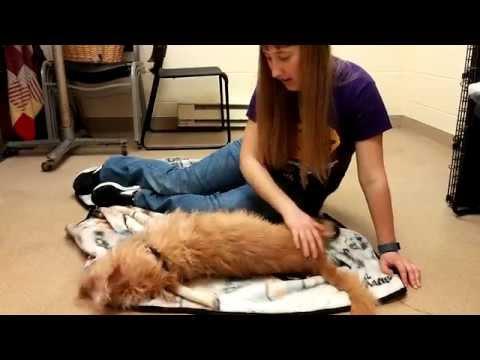 Shelter Dog Stress Reduction Study (3 min.)