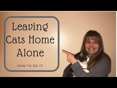 Leaving Cats Home Alone - What You Need to Know