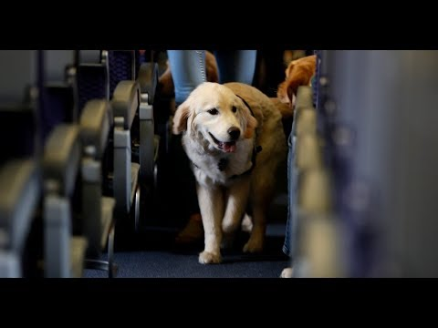 Delta Air Lines Tightens Rules for Service and Support Animals