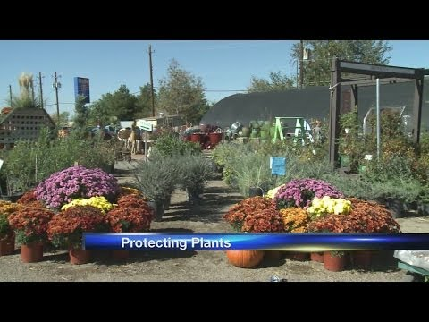 How to keep your plants healthy during winter