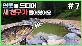 (ENG SUB)[반전주의] 초대형 연못에 새 식구들을 넣었는데... # 7