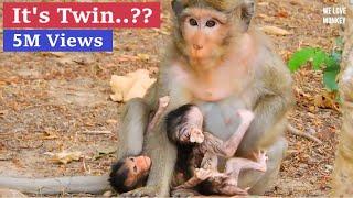 Breaking Heart Need Urgent Help Abandoned Baby Calvin Very Weak,Casi Reject Milk Baby Monkey Calvin
